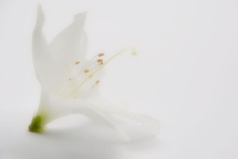 ogniuno di noi è un fiore diverso di cristinababuder