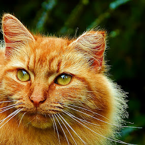 Good Morning  by James Cole - Animals - Cats Portraits