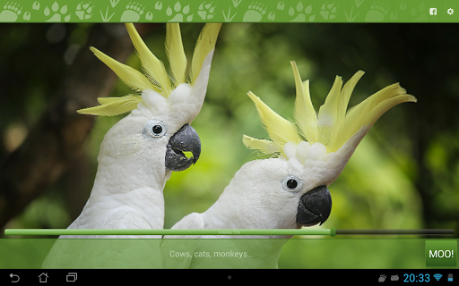 玩免費娛樂APP|下載Animal Sounds FREE - MOO! app不用錢|硬是要APP