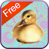 Duck Games for Toddlers - Free
