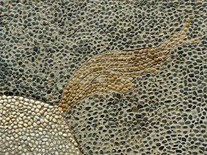 Photo: Kiezelmozaiek met jachttafereel. Detail van de leeuwenstaart
