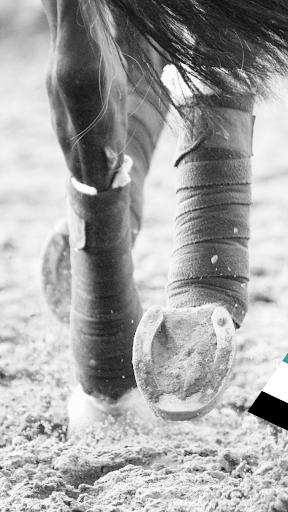 Equilab - Equestrian Tracker screenshots 1