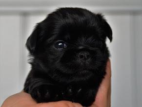 Photo: Male 3 Weeks old