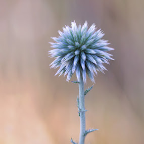 *** by Naiden Bochev - Flowers Flowers in the Wild ( wild, nature, grass, wildflower, wildlife, natural, flower )