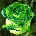 LWP Macro Rosa icon