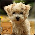 maltese puppy wallpaper - cute puppy wallpaper icon