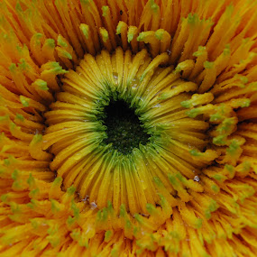 by Sara Verdini - Flowers Single Flower (  )