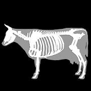 3D Bovine Anatomy 1.0 Icon