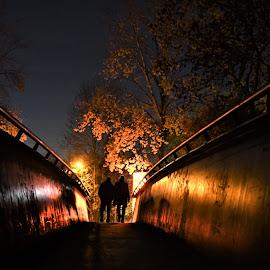 Illustration by J & M - City,  Street & Park  Night ( image, view, night, illustration, bridge )