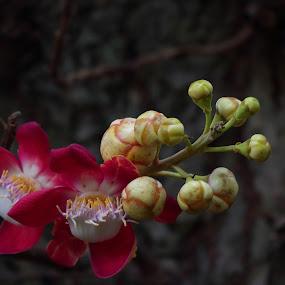 by Sudipta Ghosh - Flowers Tree Blossoms