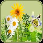 Curarse con plantas medicinales icon