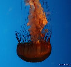 Photo: (Year 3) Day 23 - Jelly Fish