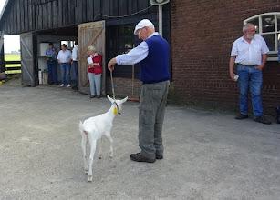 Photo: Rubriek 1: witte lammeren geboren in april. 1a. Marijke 3 vd Biezenwaard.