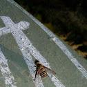 Villa Bee Fly IV