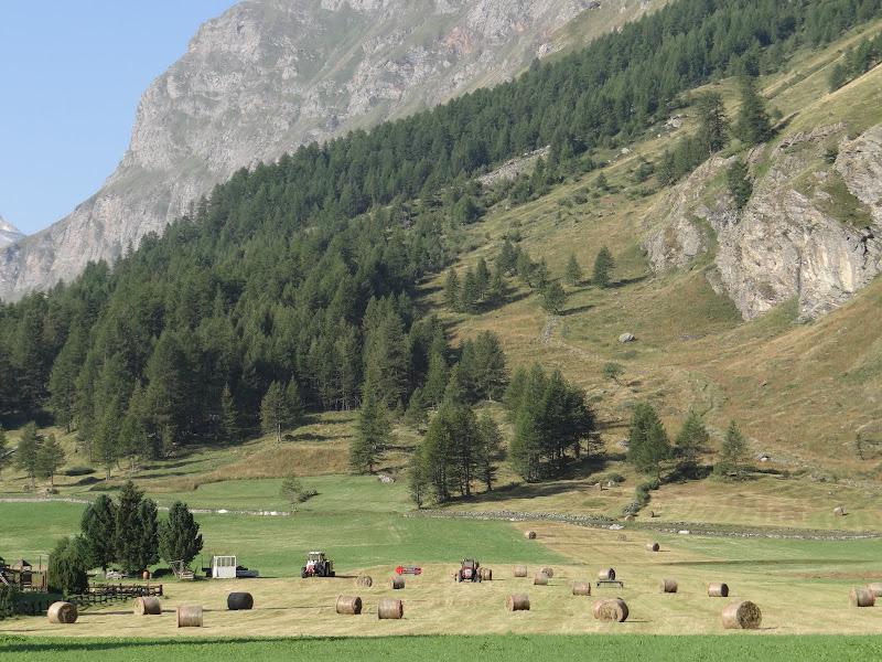Paesaggio agricolo  di VV