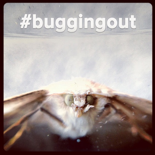 Photo: Weekend Hashtag Project: #buggingout The goal this weekend is to capture photographs of insects! Big bugs, little bugs, cute bugs, ugly bugs: Take dive into nature, bust out that mobile macro lens [if you have one] and dare to get up close and personal with some bugs. PROJECT RULES: Please only submit photos you yourself have taken over this weekend. Any image taken then tagged over the weekend is eligible to be featured on the Instagram blog at blog.instagram.com on Monday morning!