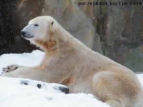 Photo: Knut geniesst den frischen Schneefall :-)