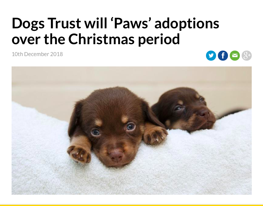 Zdroj: https://www.dogstrust.ie/