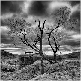 by David Bevan - Black & White Flowers & Plants