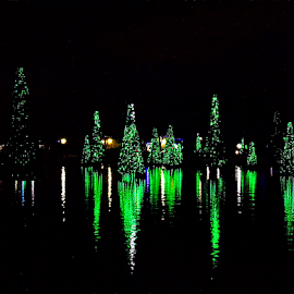 Sea of Trees by Cheryl Beaudoin - Public Holidays Christmas ( holiday, lights, water, blue, green, christmas, trees, sea, night, public,  )