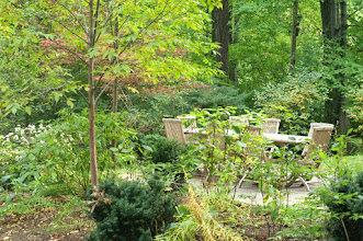 Photo: A woodsy garden in the heart of Toronto makes an oasis to spend time in after a long day at work.