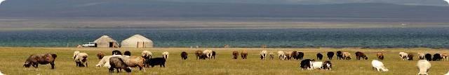 Voyage au Kirghizistan : La Route de la Soie  avec l'agence New Destination