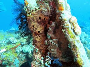 Photo: И моллюски, и иглокожие