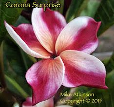 Photo: Corona Surprise