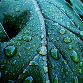 spring showers by Brook Kornegay - Nature Up Close Leaves & Grasses ( green, leaf, close up, rain,  )