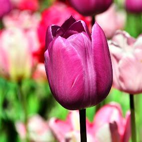 by Fathuddin Riyadz - Nature Up Close Flowers - 2011-2013