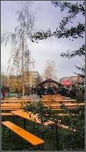 Photo: Mesteacan (Betula) - din Parcul Teilor - 2017.12.01