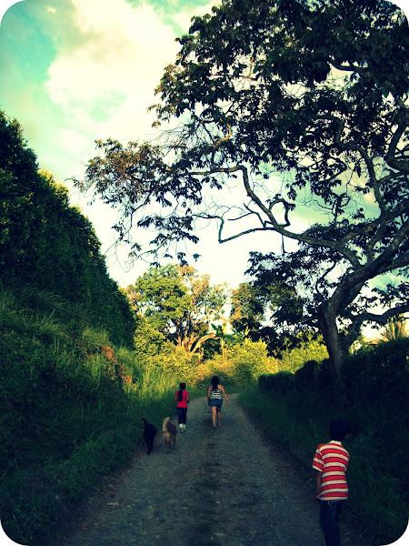 Photo: Caicedonia-Valle del Cauca-Colombia