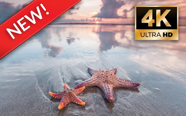 starfish HD Wallpapers - Custom New Tab