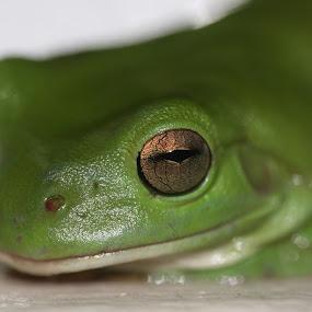 by Joe Wallace - Animals Amphibians