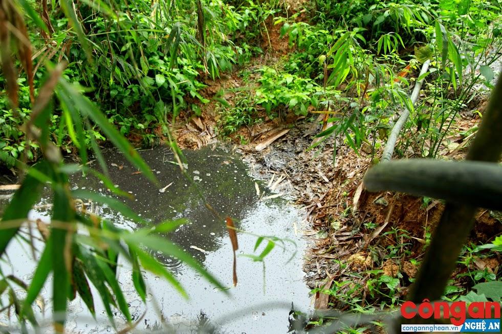 Nước thải từ trang trại chăn nuôi được xả trực tiếp ra môi trường