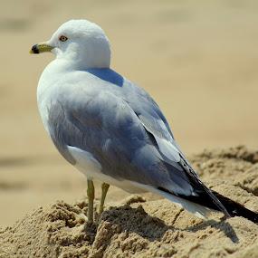 by Missy Grove Horne - Animals Birds (  )