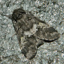 The oak marbled brown