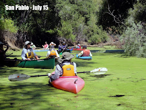 """Photo: San Pablo - up the creek in the """"Sea of Green"""" July 15"""
