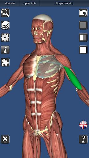 Download 3D Bones and Organs (Anatomy) 3.9 1