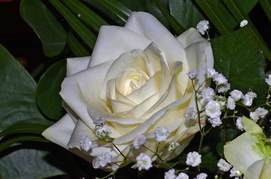 by Agatanghel Alexoaei - Flowers Single Flower