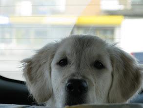 Photo: и что ж вы меня.. так тут в багажнике и оставите?