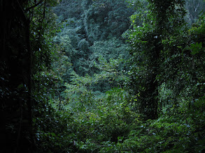 Photo: Thick forest in the crater