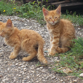 Котенца by Georgi Kolev - Animals - Cats Kittens ( котенца., треви., ден., светлина., цветове. )