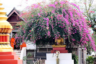 Photo: Day 263 - Bougainvillea and the Monks