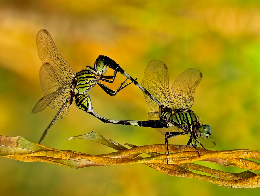 Freak Style by Syuwandi Sien - Animals Insects & Spiders