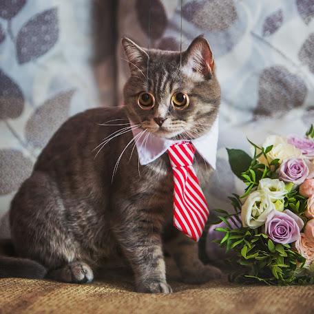 Wedding photographer Darya Sergienko (studiomax). Photo of 22.08.2017
