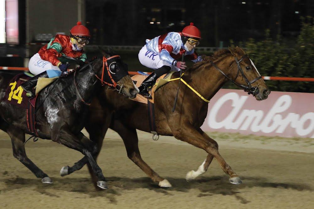 Rey Palmeño (Don Cavallo) se lleva  Handicap (1100m-Arena-VSC).