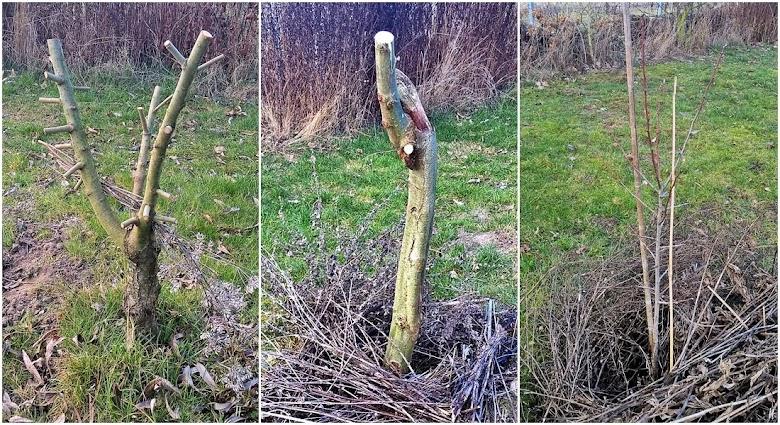 2019-02-22 LüchowSss Garten - neugepflanzte Weiden + Zwetschge (1x3)