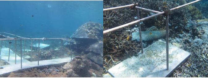 Dampak Industri Pariwisata Bahari terhadap Keseimbangan Ekosistem Kelautan