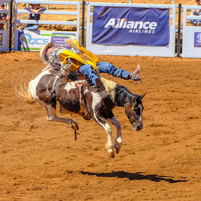 Bareback Rider by Brent McKee - Sports & Fitness Rodeo/Bull Riding ( riding high, skewbald, coloured horse, mt isa, rodeo, fuji, mount isa, bareback )